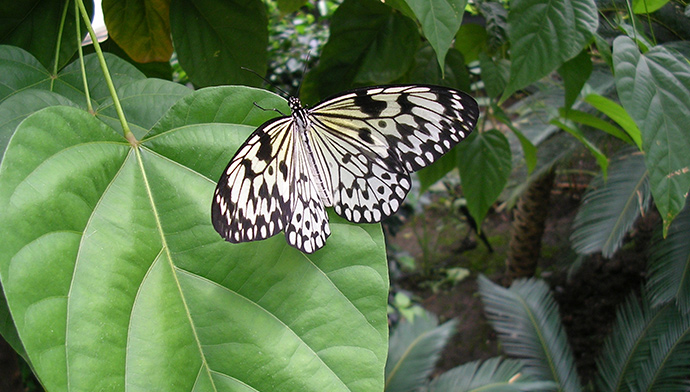 Magic of Life Butterfly House
